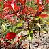 Gelincikler ve Kırmızı Turuncu Yapraklı Bitki Bir Arada