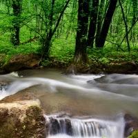 Rio-Manancial-Fonte-Floresta