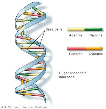 Unseen rare collection dna damagedna double helix structuredna dna double helix labeled unseen rare wallpapers ccuart Gallery