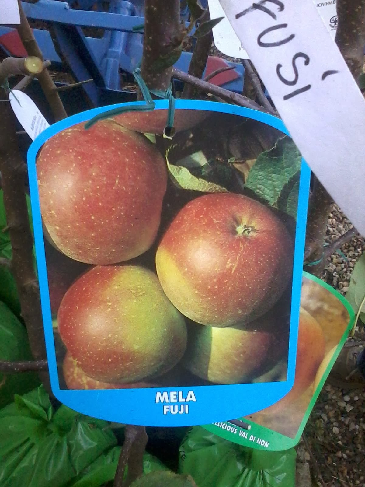 Antiche variet di mele piemontesi - Mele fuji coltivazione ...