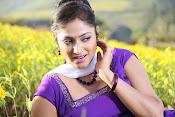 Hari priya photo shoot among yellow folwers-thumbnail-10