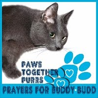 PURRS FOR BUDDY BUDD