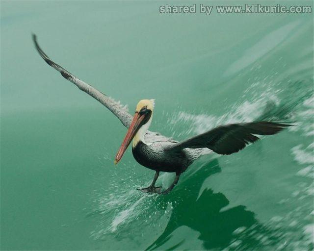 http://2.bp.blogspot.com/-LpUHBe4wuo8/TXWAqYuZJxI/AAAAAAAAQKM/Jg_GIO27tKk/s1600/these_funny_animals_632_640_03.jpg
