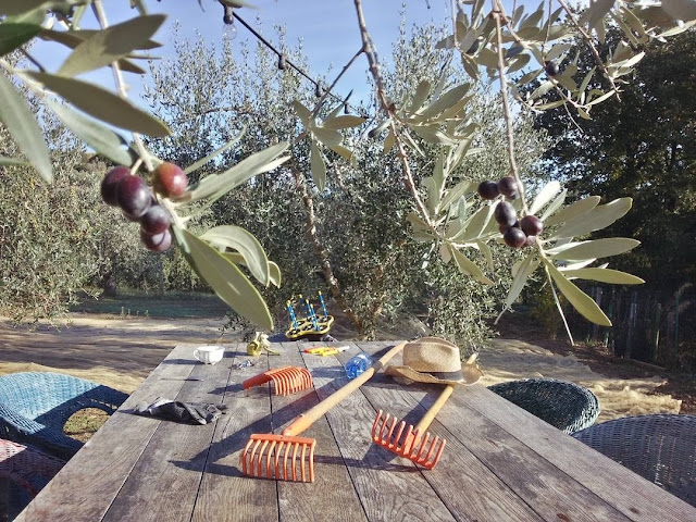 A table in an Italian olive grove by the end of the harvest and a few forgotten olives