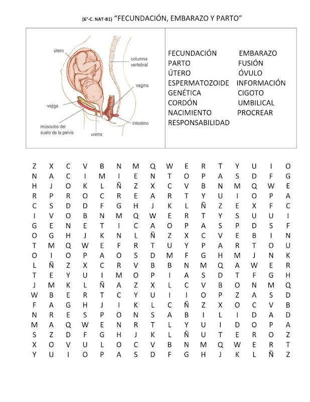 Sopa de letras fecundación, embarazo y parto