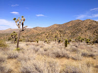 View northeast in Black Rock Canyon, Joshua Tree National Park