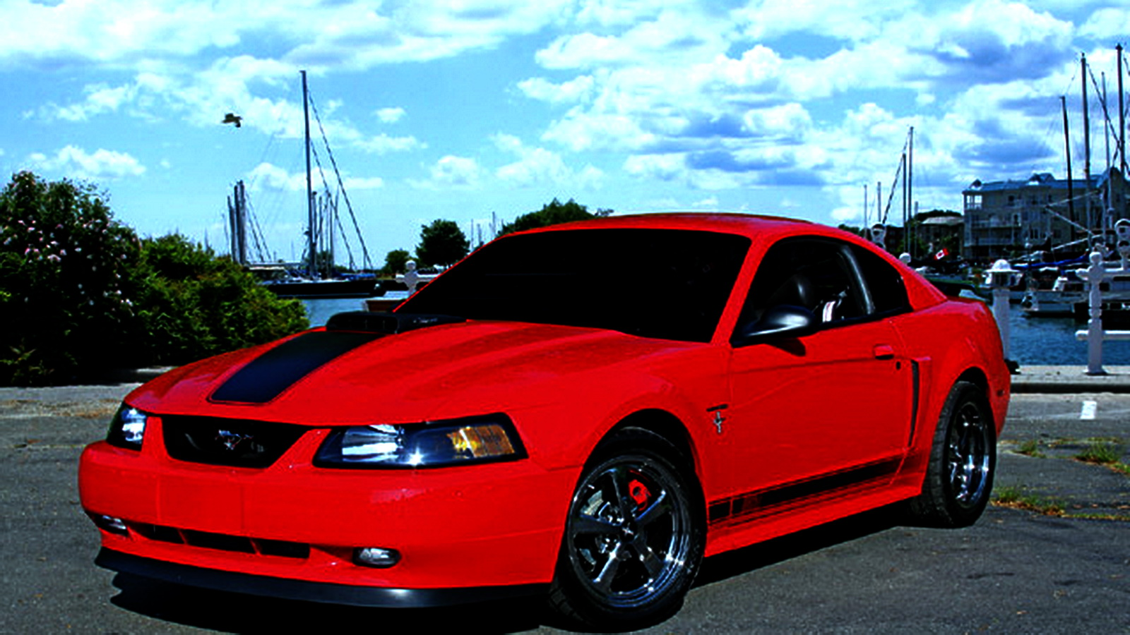 fastest ford mustangs part 3 2003 mustang mach 1. Black Bedroom Furniture Sets. Home Design Ideas