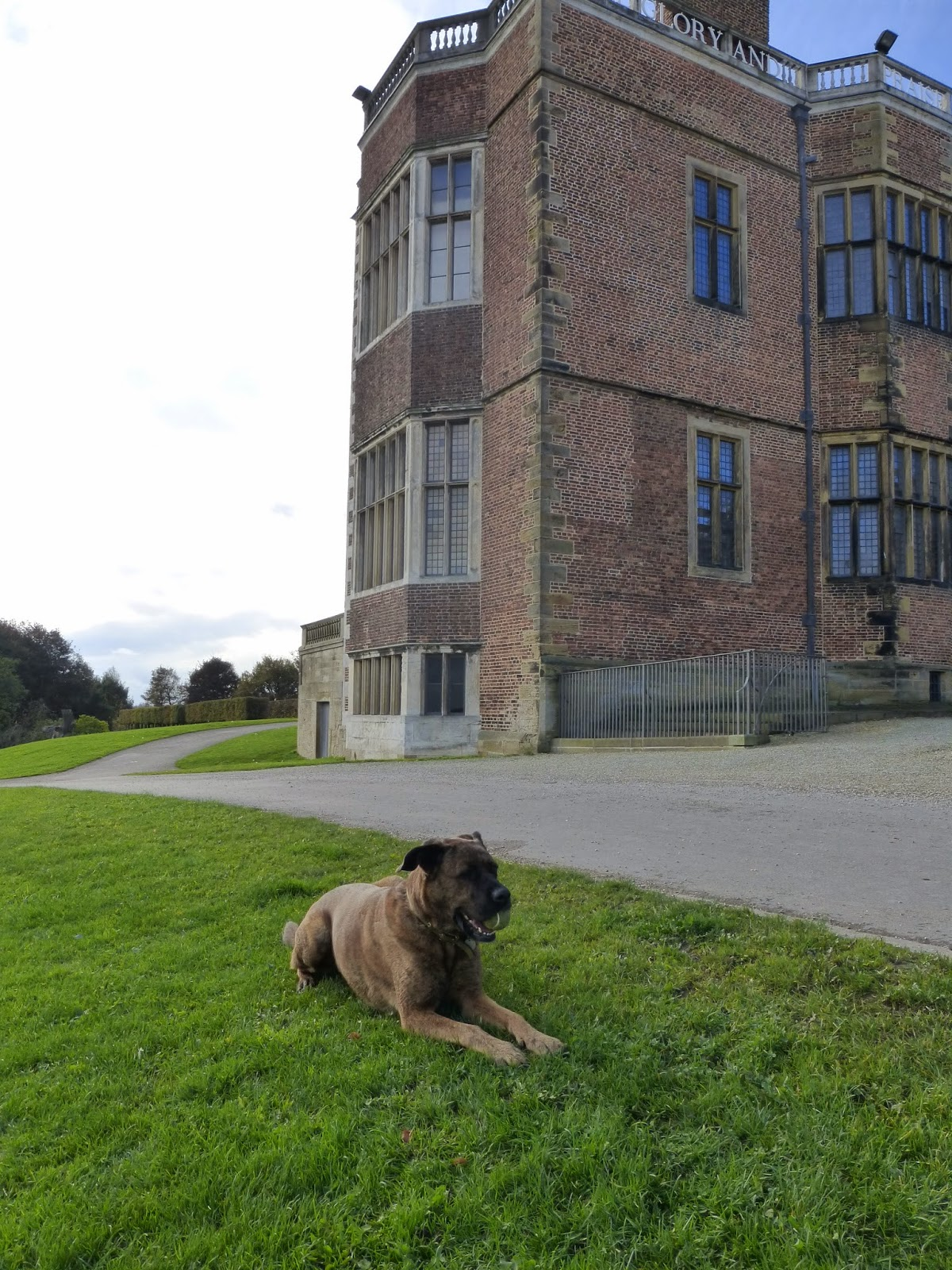 fizz laying outside of temple newsam