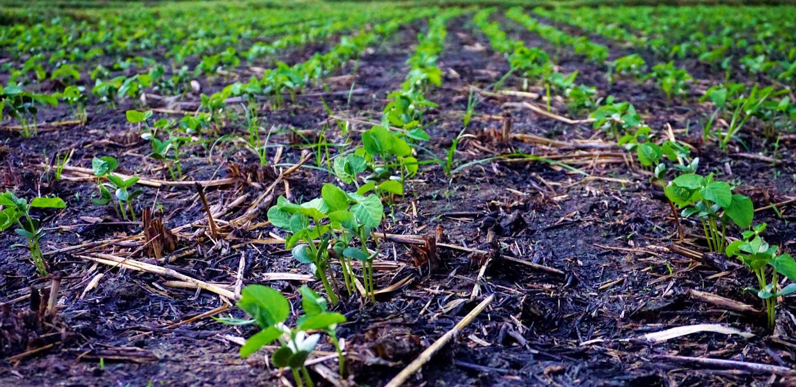 farmers field thailand