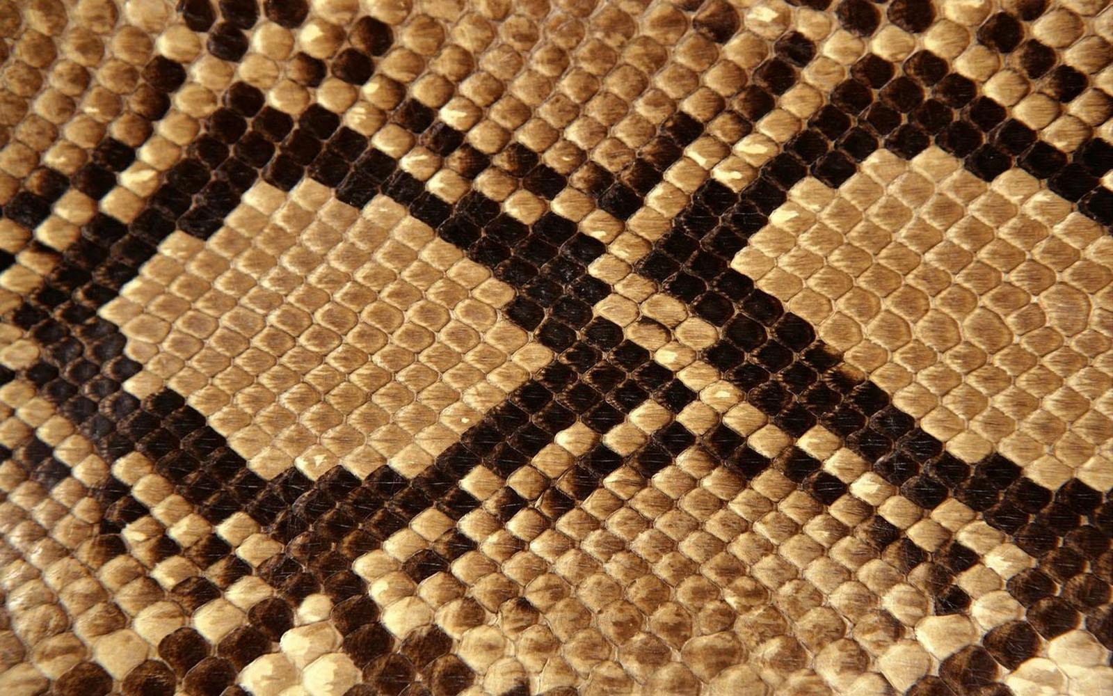 animal skin patterns - photo #12