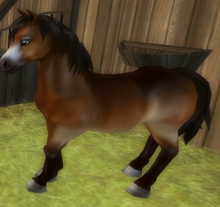 Star Stable Daily Horse Breeds