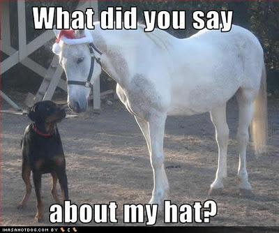 Horse Quotes Humor. QuotesGram
