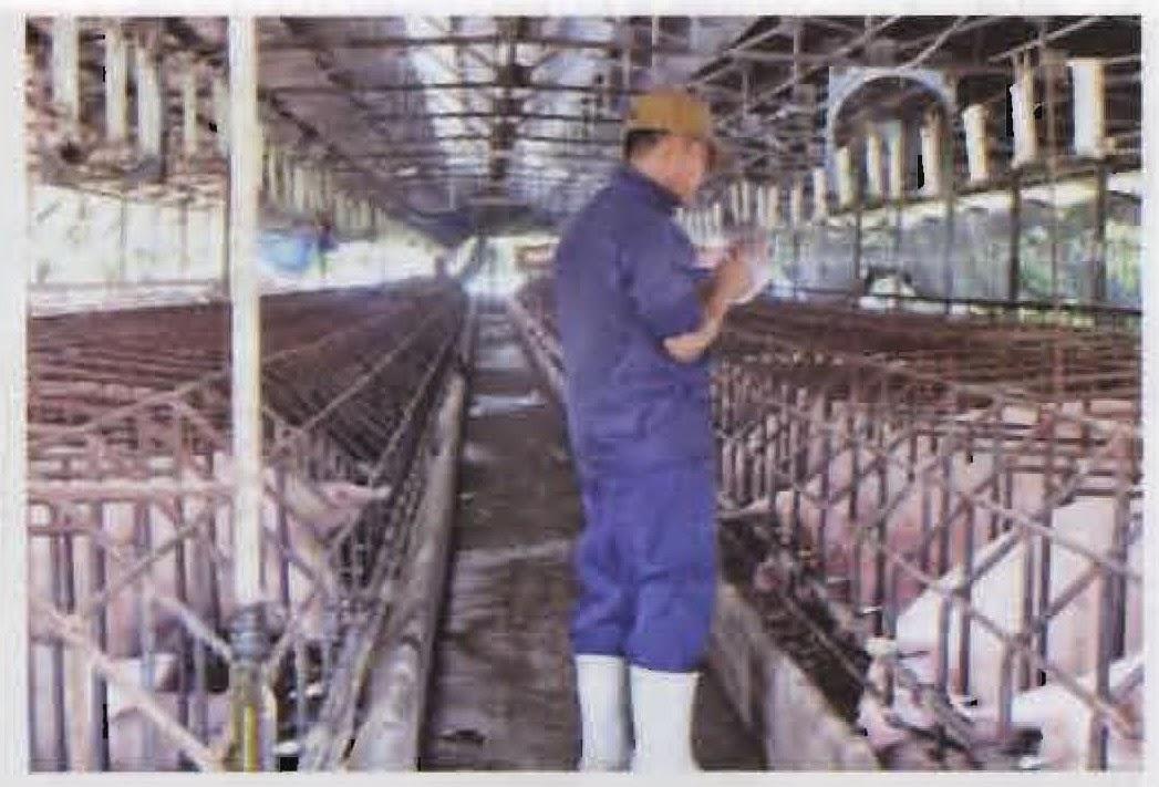 Ghi chép số liệu tiêu thụ cám hằng ngày tại trang trại.