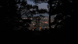 City lights through the jungle.