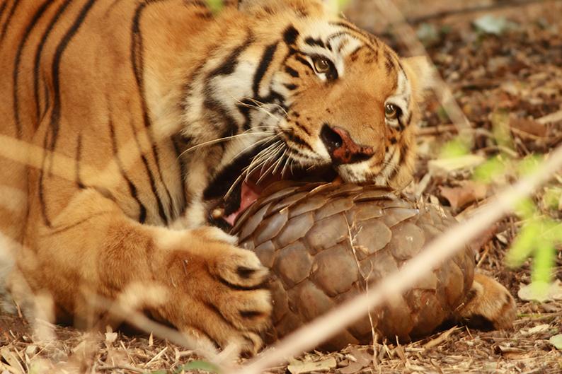 Wild Animal Health Fund - Solving wildlife health issues