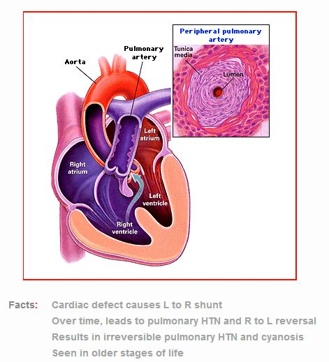 Tutor\'s Notes: general, cardiovascular, respiratory and renal ...