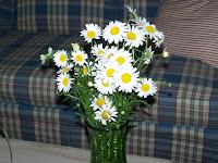 My Favorite Flower - Daisies