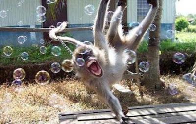 Los Animales más graciosos del Mundo (Fotos).