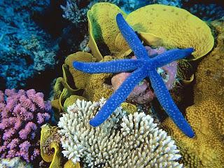Morska zvijezda slike besplatne pozadine za desktop download