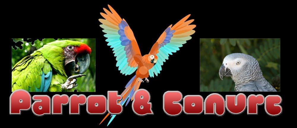 Parrot & Conure