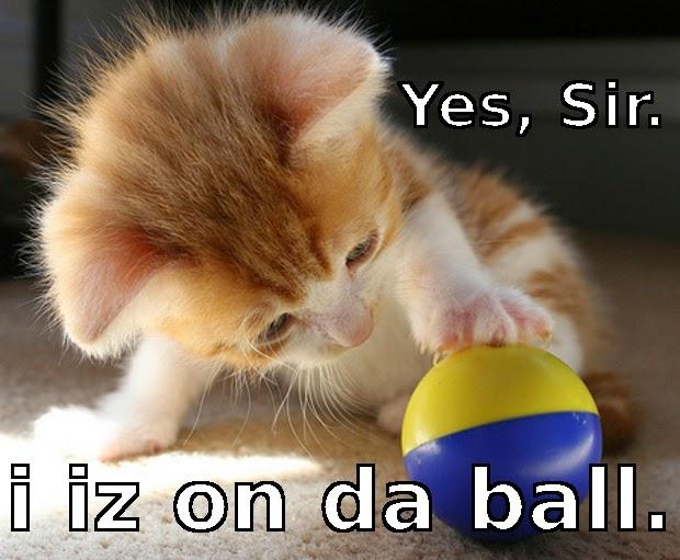 Instadebit meme of cat on the ball.