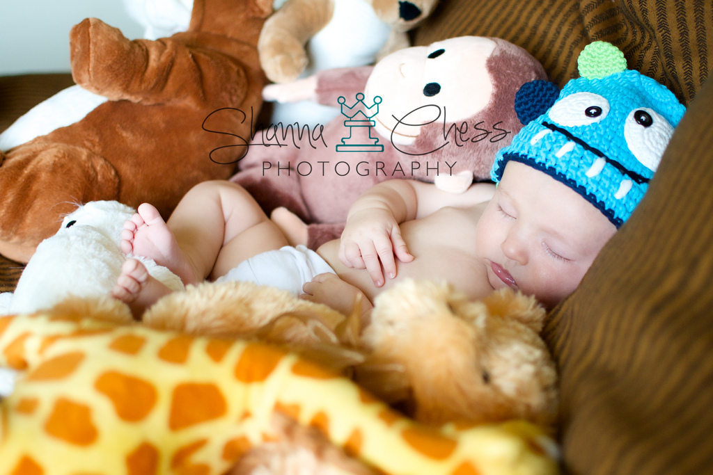 eugene or baby photography 3 months stuffed animals