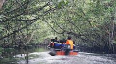 Bintan mangrove tour sunflies Tour whatsup on 081378368868