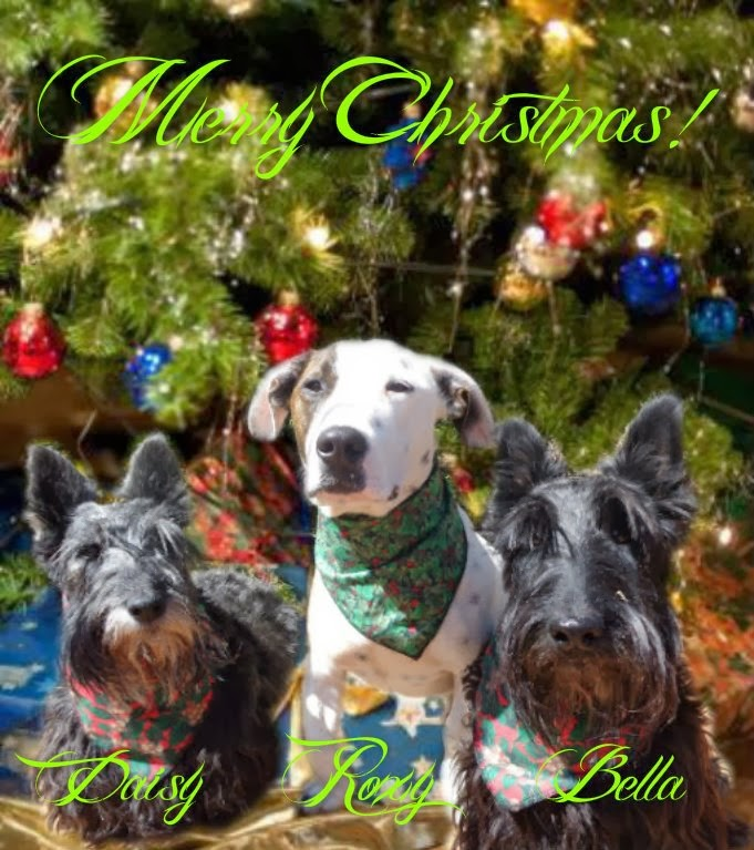 Xmas card from Daisy,Roxy&Bella