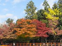 紅葉の錦絵を見る風景は上賀茂神社ならではの趣きがあった。