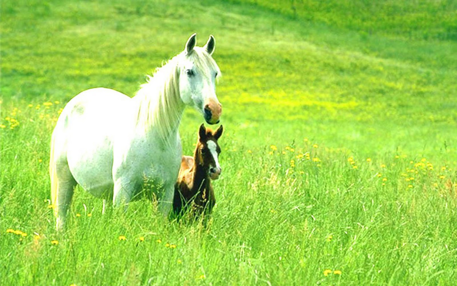 Must see   Wallpaper Horse Scenery - Animals+Wallpapers+About+Horses+and+Ponies  Photograph_783975.jpg