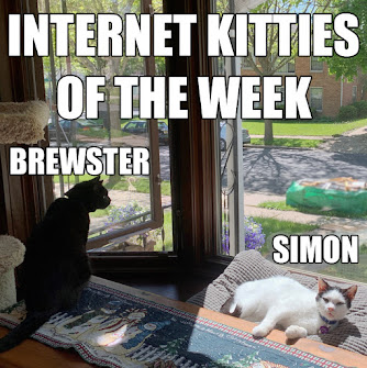 INTERNET KITTIES OF THE WEEK!