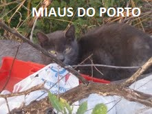 Miaus do Porto