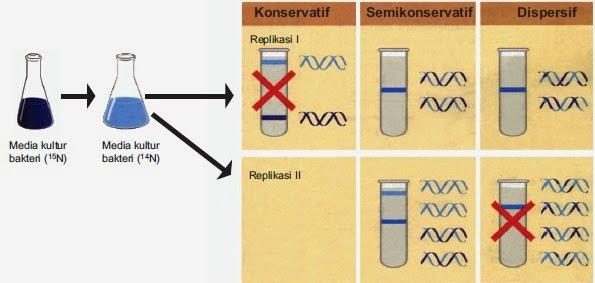 Replikasi DNA menurut Meselson dan Stahl