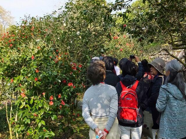 京都薬用植物園「春の特別見学会」に行った。