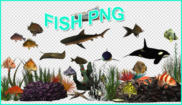 cut out fish #1c