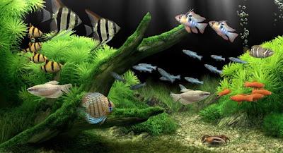 Dream Aquarium 1.295 Screensaver Full Crack