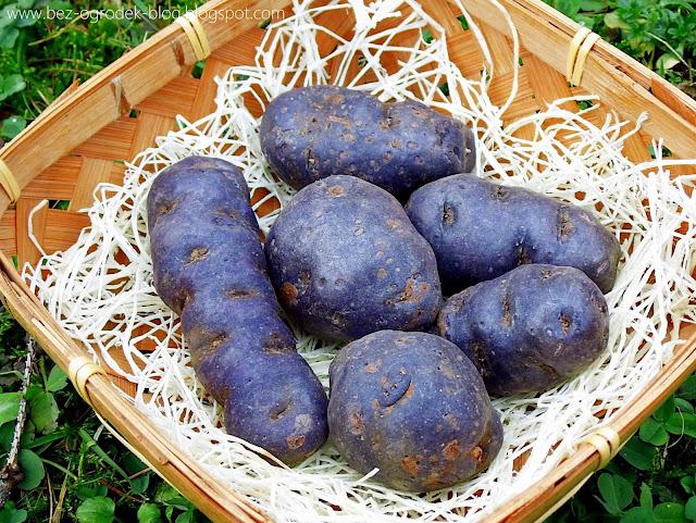 fioletowe ziemniaki