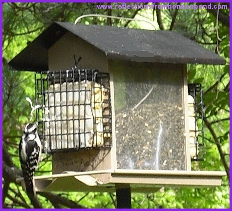 how to keep starlings away from suetfeeder