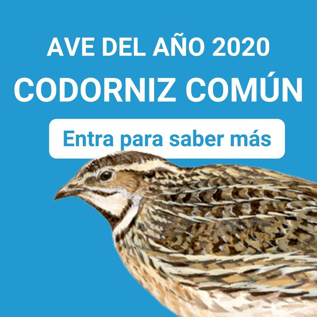 Codorniz, ave del año 2020
