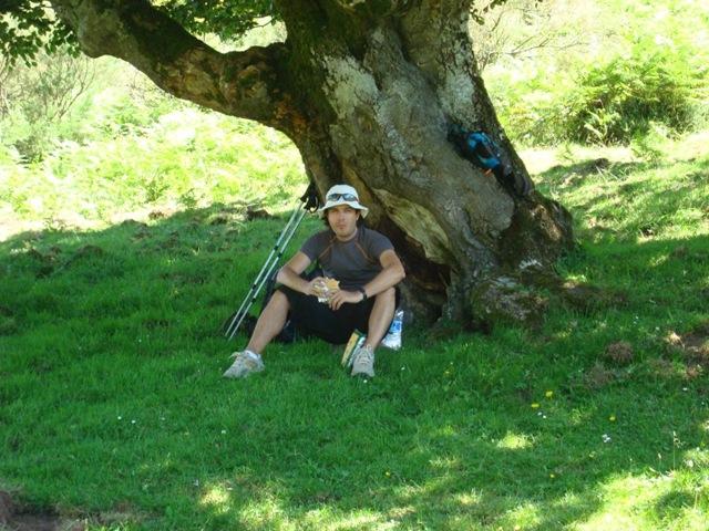 Neem Herbal de Chiapas La sombra de un rbol tan cotizada como un