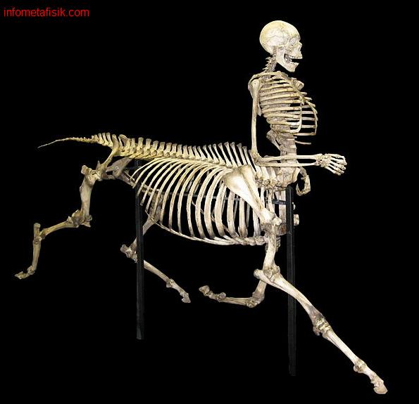 Centaurs, Manusia Setengah Kuda dalam Mitologi Yunani Kuno - infometafisik.com