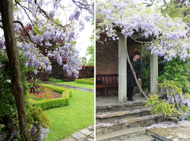 kingston-maurward-wisteria-bunches-todaymyway.com