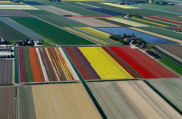 Pemandangan Indah Taman Bunga Tulip