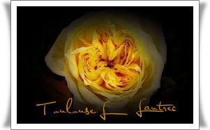 Portrait  Toulouse Lautrec