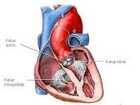 penyakit katup jantung, penyakit klep jantung, Blog Keperawatan