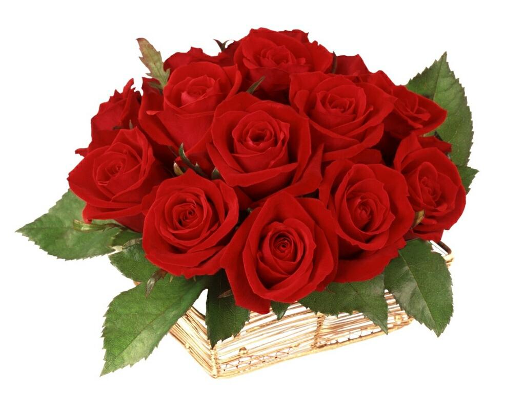 http://2.bp.blogspot.com/-LwIbpt-6uvA/UPMDqFuNdgI/AAAAAAAAg9U/mQk2oEJF0UM/s1600/Red+roses+wallpapers.+(2).jpg