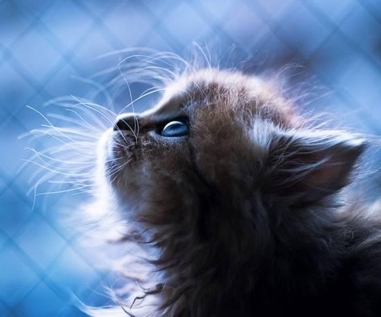 kucing-comel-kesepian