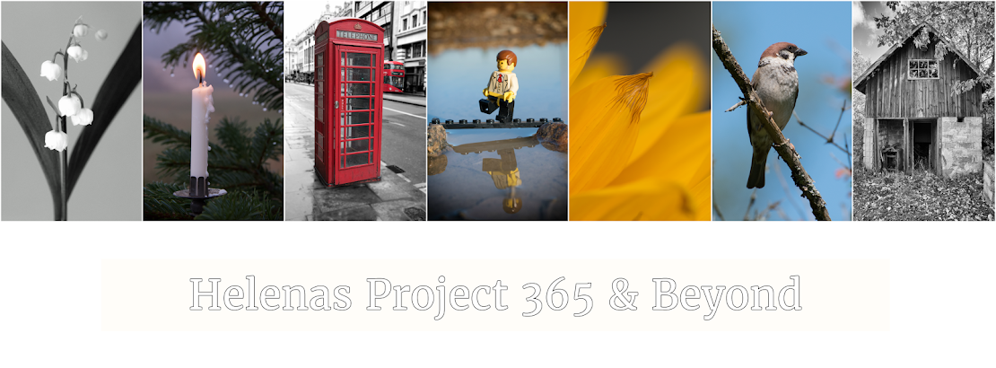 Project 365 & Beyond!