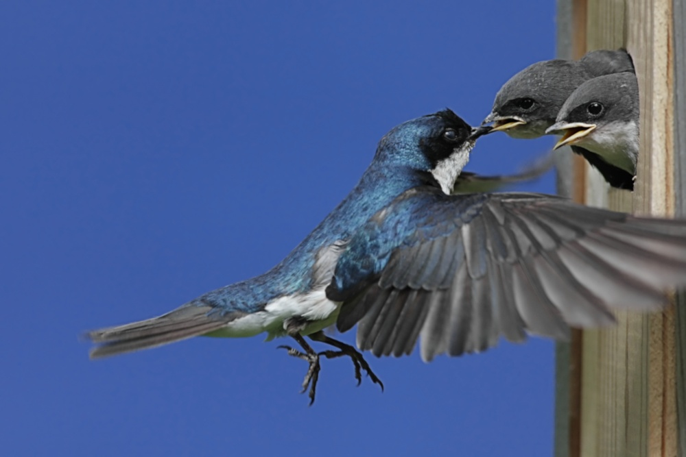 Steve byland nature photography create your own bird for Types of birdhouses for birds