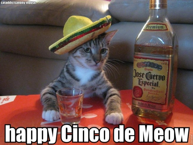 essay on cinco de mayo Find out more about the history of cinco de mayo, including videos, interesting articles, pictures, historical features and more get all the facts on historycom.